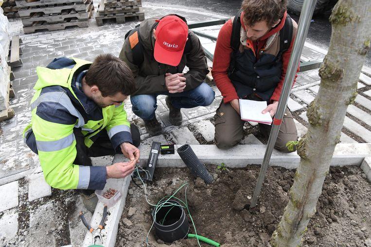 Dankzij sensoren kan exact gemeten worden wanneer een boom water nodig heeft, en welke hoeveelheid optimaal is.  Beeld GF