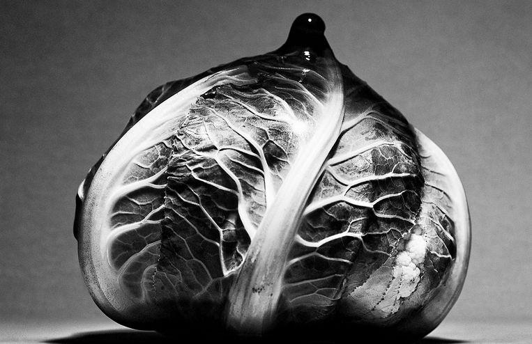 'Boezem-bloemkool in latex'. Beeld Phillipe Vogelenzang