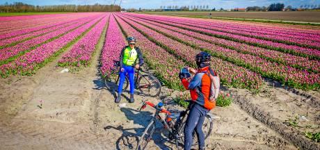De regio heeft z'n eigen Keukenhof: eerste tulpenvelden staan in bloei én dat levert mooie foto's op