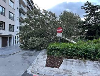 200 oproepen voor stormschade in noorden van West-Vlaanderen: vooral omgewaaide bomen en averij aan daken