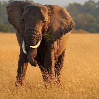 het-lot-van-de-olifant-in-de--%E2%80%98beschermen-kost-veel-geld-het-mag-ook-iets-opleveren%E2%80%99