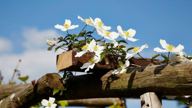 Hoe je planten laat klimmen als ze dat niet vanzelf doen