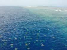 Grootste kolonie zeeschildpadden ter wereld blijkt veel groter dan gedacht