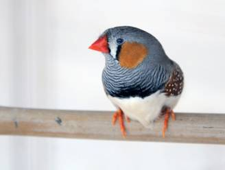 10.000 euro boete voor man (65) die jarenlang illegaal vogels vangt