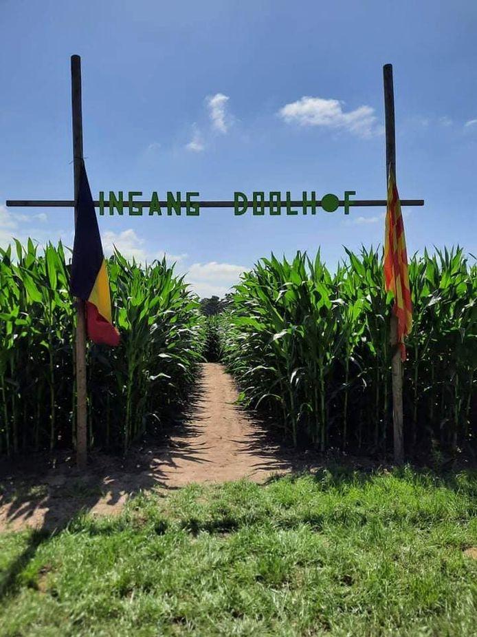 Het maïsdoolhof in Peer.