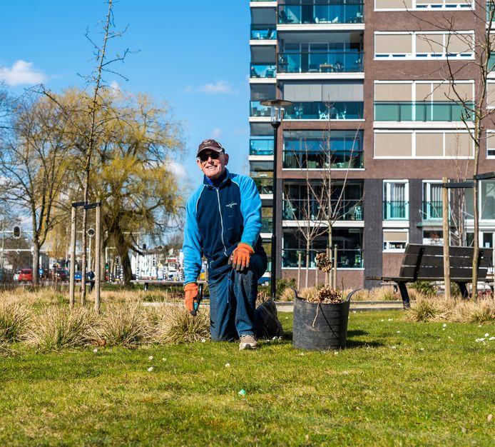 Piet Baanvinger aan het tuinieren in Park Zuidhof aan de Campanula.