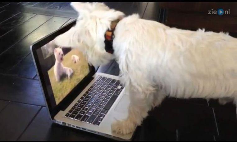 Hondje ziet vrienden op laptopscherm