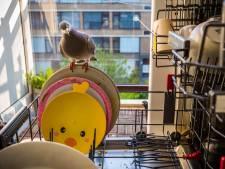 Natuurfotograaf Jasper Doest wint World Press Photo met serie over duiven Ollie en Dollie