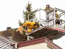 Brandweer redt kat Marly (3) na een koude, stormachtige nacht van het dak