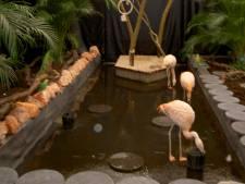 Twitteraars klagen over levende flamingo's in Utrechtse Intratuin