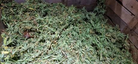 Wietkwekerij met 400 planten ontmanteld in Hengelo