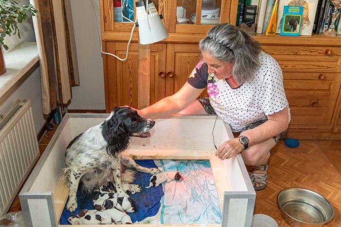 Hond Hetty kreeg tien pups.