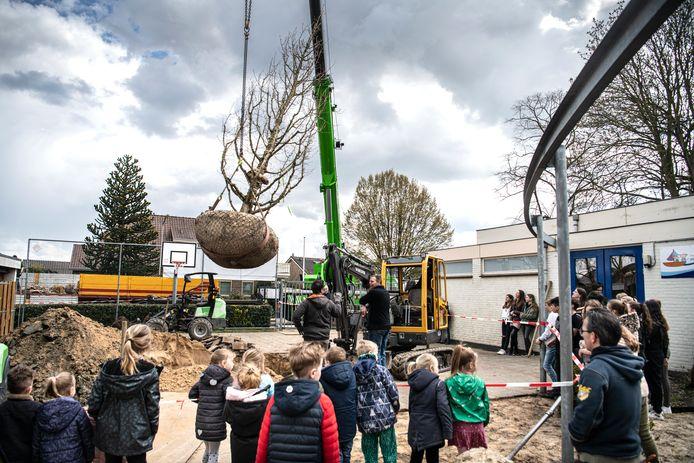 Bij de school in Altforst wordt een boom geplant.