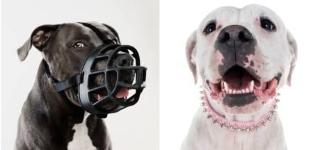 Hondenbescherming slaat alarm: hoog-risicohond bijt erop los