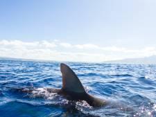 """Un garçon de 10 ans survit à une attaque de requin: """"Je pensais que j'allais mourir"""""""
