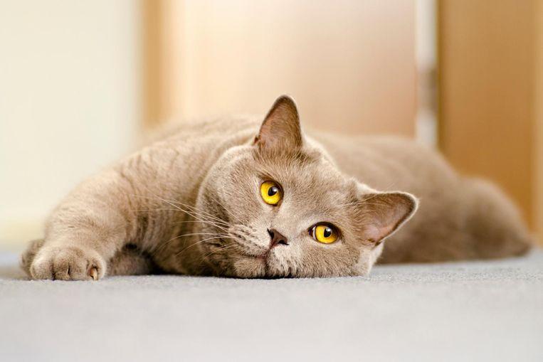 Foto ter illustratie. De afgebeelde kat is niet poes Sophie.