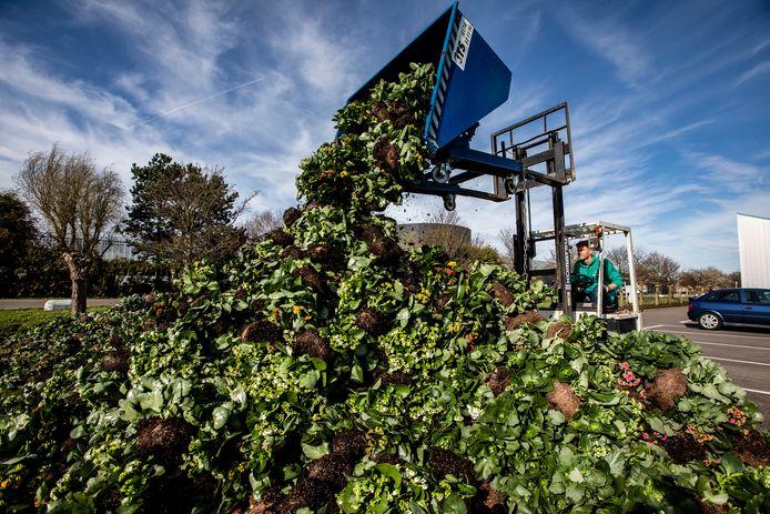 De handel in sierteeltproducten is vastgelopen, daardoor worden planten en bloemen massaal vernietigd.
