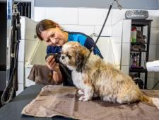 Waarom Mila en andere honden in de lockdown wél naar de kapper mogen: 'Anders bijt ze zich helemaal open'