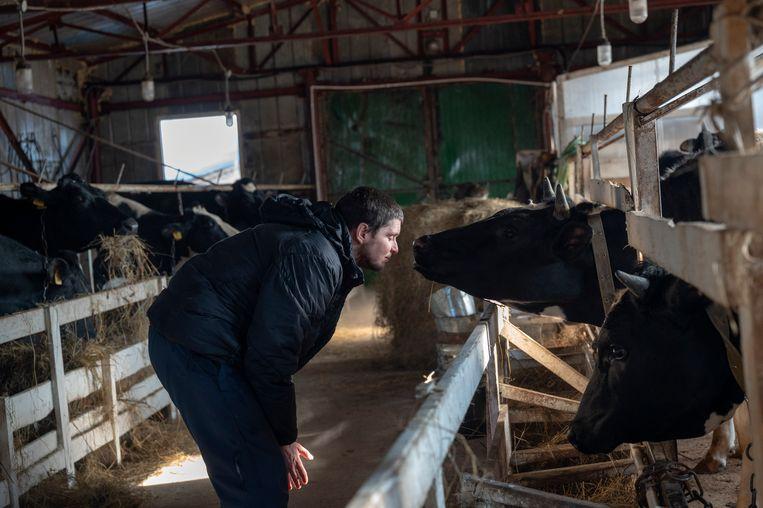 Michail Oetrobin en zijn koeien. Beeld Yuri Kozyrev / Noor