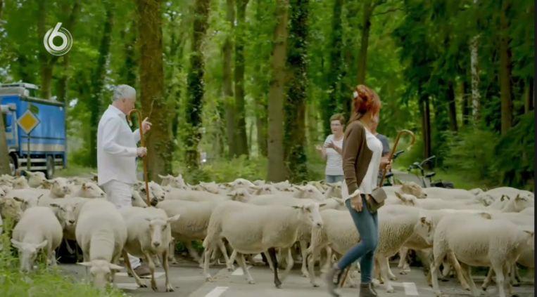 Bram Moszkowicz en Rachel Hazes tussen de schapen. Beeld SBS6