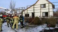 Golden retriever overleeft woningbrand niet