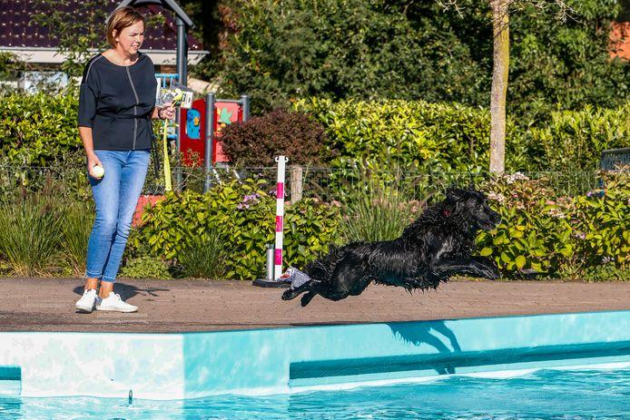 Honden mogen helemaal los in het zwembad van Loo-Bathmen