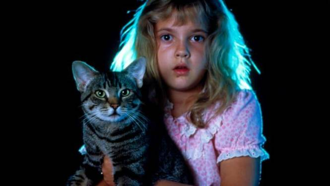 """Het Perron presenteert Catfest: """"Een dag vol films met en over katten"""""""