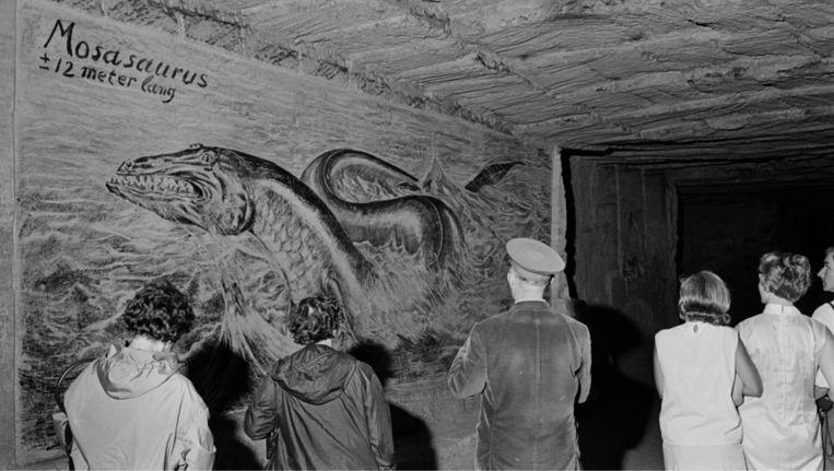 Tekening van Mosasaurus in de Gemeentegrot, in 1966. Beeld ANP