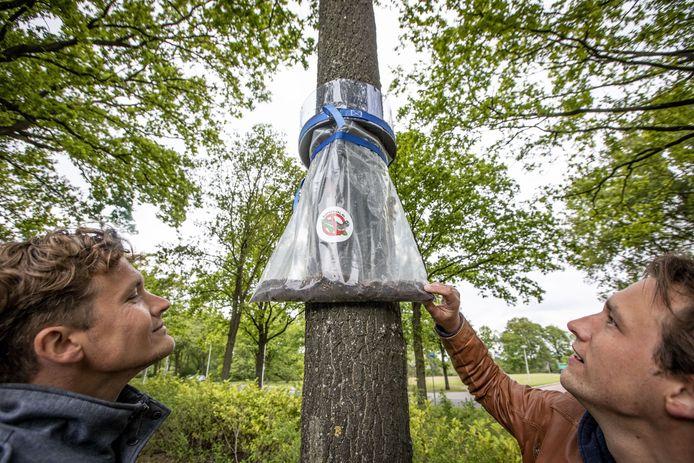 """Jeffrey (rechts) en Collin van den Dolder bij een rupsenval in Oldenzaal. """"Zal me niet verbazen dat ze de rupsen er zelf in hebben gestopt"""", zegt hun opponent Silvia Hellingman.  De broers hebben een advocaat in de arm genomen."""
