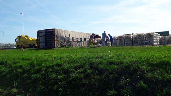 De kippen worden naar een andere trailer gebracht.