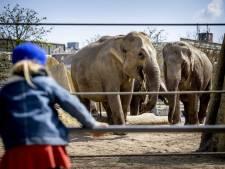 We zien elkaar bij de olifanten. Daar praat je anders dan voor de reusachtige kooi waarin de gieren verblijven