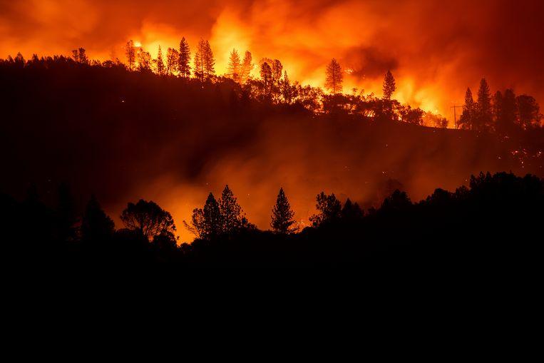 De bosbranden in Californië hebben niets meer te maken met een normaal bos-econsysteem. 'Ze zijn 100 procent uitzonderlijk', volgens Valérie Trouet. Beeld AP