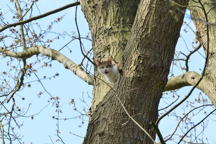 Kat gaat er vandoor na reddingsactie uit boom in Prinsenbeek.