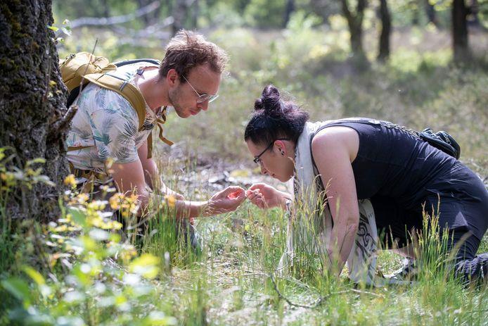 Deelnemers aan de excursie nemen een kijkje bij het mierenreservaat in Bennekom.