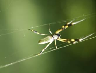 Slecht nieuws: spinnen kunnen tellen