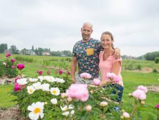 5.000 vierkante meter bloemenpracht vlak naast sportcentrum: Bens Bloemenplukweide heropent op nieuwe locatie in Kleistraat