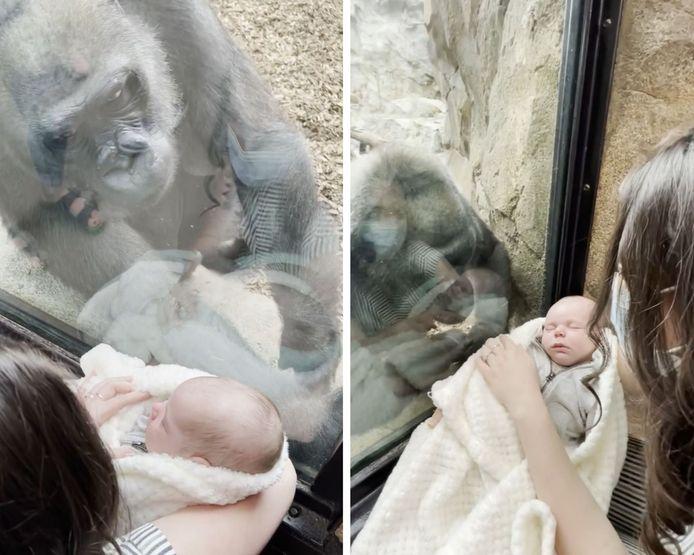 Un singe admire un nouveau-né à travers la fenêtre d'un zoo.
