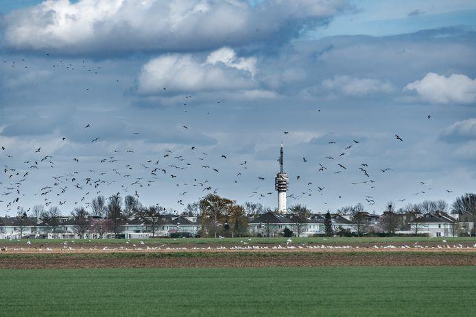 De polder, gebied Bulkenaar, ten zuidwesten van Roosendaal is een beoogde plek voor de nieuwbouw van het Bravis Ziekenhuis.
