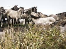 Eddy Nagel uit Lelystad: 'Ik knip geen hekken stuk, maar wil gewoon deze dieren eten geven'