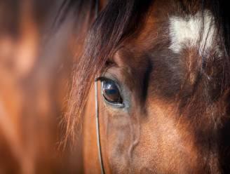Hongerige Venezolanen slachten paard in dierentuin