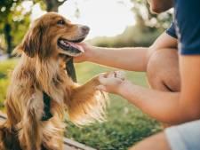 Les chiens plus enclins à jouer quand leurs maîtres les regardent