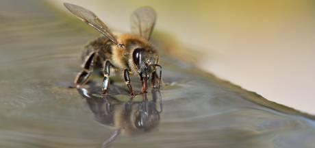Honingbij spoort corona op: bedrijf van Leon uit Apeldoorn komt met bijzondere sneltest