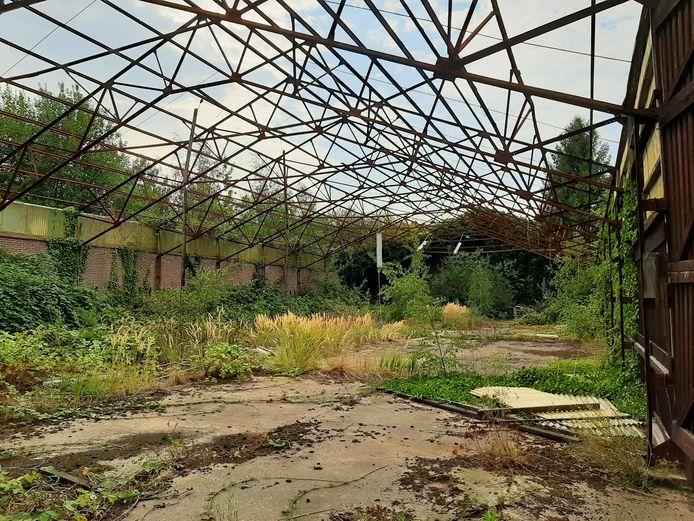 Het onkruid tiert welig in de voormalige fabriekshallen van Cantrijn in Breda. Wat rest zijn metalen karkassen na het verwijderen van de asbestdaken.