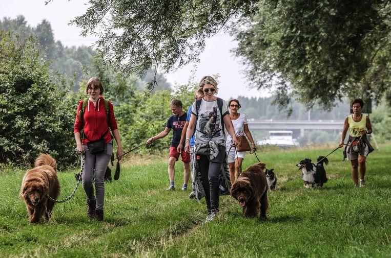 De wandelingen midden de natuur zijn een plezier voor de baasjes en hun viervoeters.