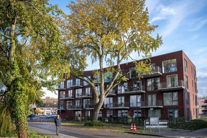 De gesnoeide boom voor appartementencomplex het Bastion