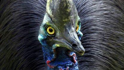 Zeldzame loopvogel zit al vijftig jaar alleen in Pakistaanse zoo