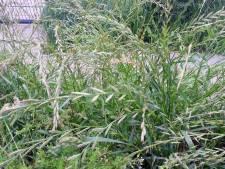 Opgepast: zo gevaarlijk kan wild gras zijn voor je huisdier