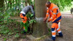 """Politie staat voor raadsel in onderzoek naar 'bomenhater': """"Geen vijanden, geen vetes, geen getuigen"""""""