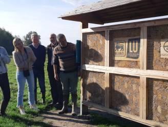 Reuzen-insectenhotel opent in Damme