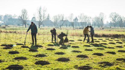 Roeselare zet verder in op vergroening via projectoproep Natuur in je Buurt